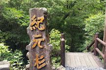 Kigensugi Cedar, Yakushima-cho, Japan