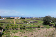 Quinta da Jardinete Vineyard, Ponta Delgada, Portugal