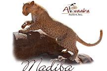 Akwaaba Predator Park, Rustenburg, South Africa