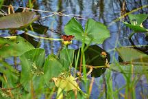 Gumbo Limbo Trail, Everglades National Park, United States
