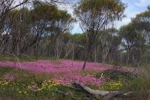 Mount Brown Lookout, York, Australia