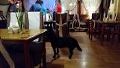 """Ресторан """"Жемчужина"""", набережная Назукина на фото Севастополя"""