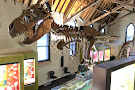 Australian Fossil and Mineral Museum