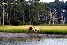 Chincoteague Island Adventures, Chincoteague Island, United States