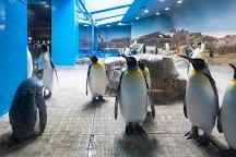 Nagasaki Penguin Aquarium, Nagasaki, Japan