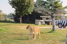 African Lion Safari, Hamilton, Canada