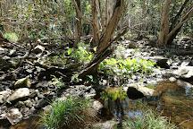 Mowbray National Park, Port Douglas, Australia