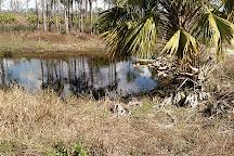 Fred C. Babcock-Cecil M. Webb Wildlife Management Area, Punta Gorda, United States