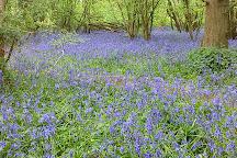 Druidstone Park, Blean, United Kingdom