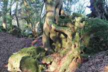 The Secret Forest, Clearwell, United Kingdom