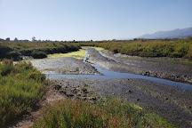 Carpinteria Salt Marsh Nature Park, Carpinteria, United States