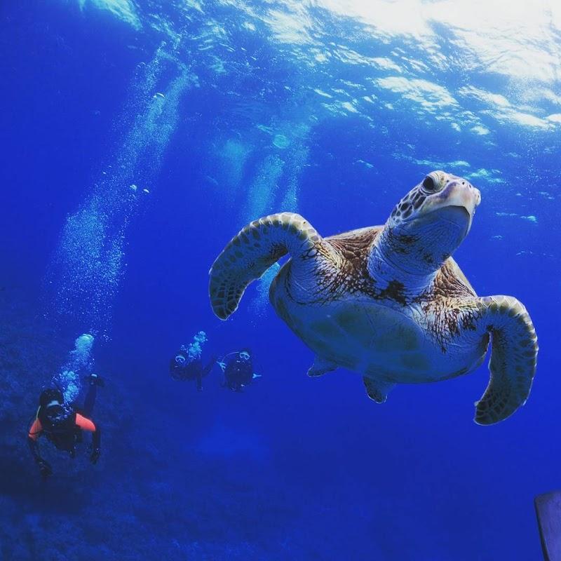 沖縄ダイビング MAHALOHA(少人数制、器材無料、水中写真プレゼント)