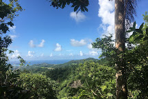 Coco Hill Forest, Melvin Hill, Barbados
