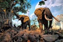 Johnny Morris' Wonders of Wildlife National Museum and Aquarium, Springfield, United States