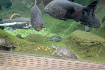 Bristol Aquarium, Bristol, United Kingdom