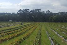 Berry World, Timboon, Australia