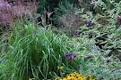 Tanglebank Gardens