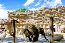 ABQ BioPark Zoo, Albuquerque, United States