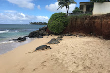 Sandy Cheeks Tours, Makawao, United States