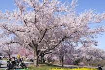 Sakura no yama Park, Narita, Japan