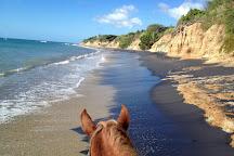 Esperanza Riding Company, Isla de Vieques, Puerto Rico
