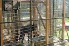St Francis Wolf Sanctuary