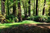 Redwood National Park, Redwood National Park, United States