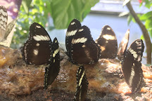 Cockrell Butterfly Center, Houston, United States