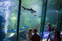Hunstanton Sea Life Sanctuary, Hunstanton, United Kingdom