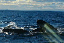 Sydney Whale Watching, Sydney, Australia