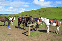 Stone Hill Horse Trek, Pukeatua, New Zealand