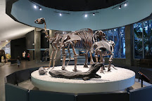 La Brea Tar Pits and Museum, Los Angeles, United States
