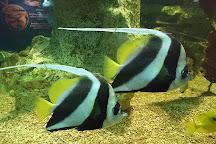 SeaQuarium Rhyl, Rhyl, United Kingdom