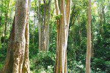 Pu Huong Nature Reserve, Quy Hop, Vietnam