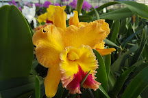 Orchids by Hausermann, Villa Park, United States