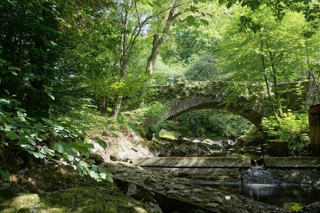 Sutherland's Grove forest walks