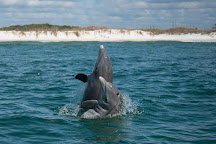 Dolphin and Snorkel Tours Inc., Panama City Beach, United States