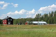 Horses of Taiga, Svansele, Sweden
