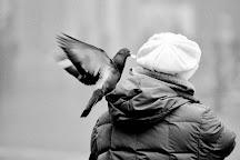 Vinicio Tassani Photographer, Venice, Italy