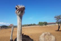 Curacao Ostrich Farm, Curacao