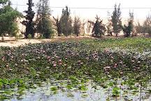 Lotus Lake, Mui Ne, Vietnam