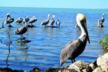 Florida Keys Wild Bird Rehabilitation Center, Tavernier, United States