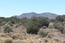 Alpacas of the Southwest, Kingman, United States