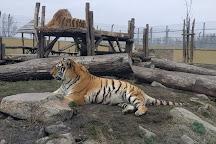 Malkia Park- Big Cats Rescue, Orechova Poton, Slovakia