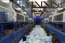 Bohol Aquarium Zoo, Maribojoc, Philippines