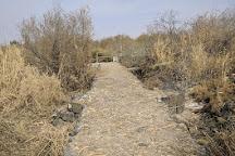 Azraq Wetland Reserve, Azraq, Jordan