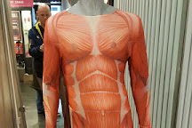 Body Worlds, Amsterdam, The Netherlands