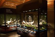 Sigurgeirs Bird Museum, Reykjahlid, Iceland