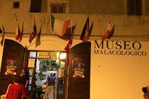 Museo Malacologico di Anna Ragno C. S. A. S., Vieste, Italy