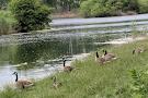 Tifft Nature Preserve